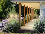 lindheimer muhly grass texas sage desert willow and autumn sage
