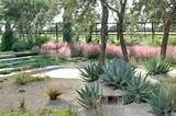 Muhly grass & succulents!!! Lovely