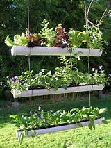 ... garden which is the right choice for you want a vertical garden with a
