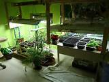 indoor vegetable garden design with light