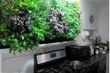 indoor vertical herb garden in the kitchen