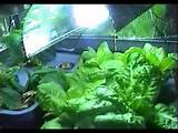 indoor garden lighting design indoor garden lighting with interior