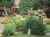 Tropical Zen Garden Design Photograph   Tropical zen garden