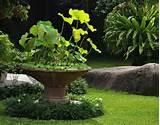 Found on garden-design.me