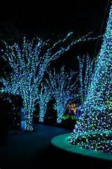 "Botanical Garden ""Garden Lights Holiday Night""–Atlanta, GA"