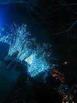 atlanta botanical garden garden lights 2011
