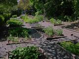 Medicinal herb gardens were characteristic of European universities ...