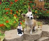 San Diego Padre Garden Gnome | FOLLOW ME TO: GARDENANDBLISS.COM
