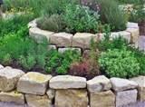 spiral herb 2