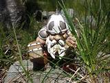 Garden Gnome Funny Stuff | Tiny Garden Battle Gnome - The Green Head