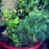 herb garden for mom