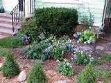 front yard herb garden plants picture