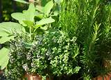 herb garden planting outdoor herbs sorted by season