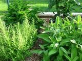 herbs01