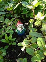Small garden gnome – or Capitalist SPY?!?! (Photo credit: Wikipedia)