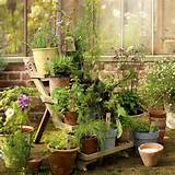 garden potted plant display garden design terracotta pots image
