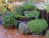 How to Build a Double Barrel Herb Garden via The Herb Companion