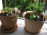 steps to making an container herb garden