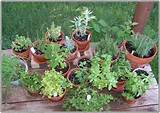 Make herb garden doesn't need to prepare a large area. Use container ...