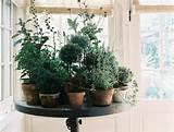Monday Musings - Perfect Potted Plants