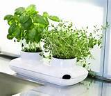 Actually, potted herb garden ideas become a good solution for small ...