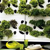 herb garden wall we love this wall of potted herbs it s such a clever ...