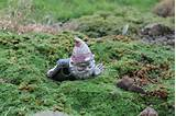 related pictures nosey little garden gnome funny gnome terrarium decor
