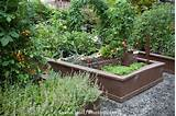 organic raised bed vegetable garden design with herbs and gravel path