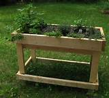 raised herb bed