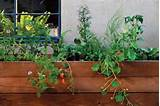 Modern Container Garden Planter Commune Design