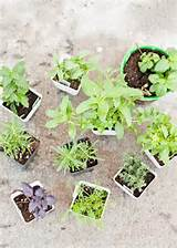 It's amazing what you can grow in pots! Containers can add a lot of ...