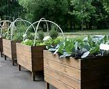 garden-design-ideas-container-gardening-3.jpg