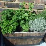 garden topics herb containers herbs the easy and convenient way