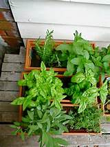 astounding small herb garden design plans barely herb garden in pot