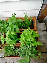 small herb garden design astounding small herb garden design