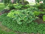 shade garden ideas hostas photograph design ideas for host 5104 jpg
