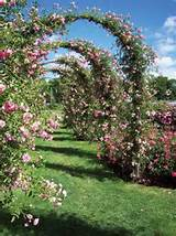 garden arch inspiration for my new garden bed..