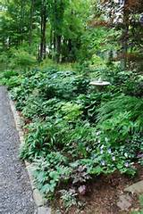 this shade garden was designed with a variety of shade perennials and