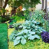 color in the shady corners of your yard with our garden design
