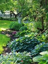 shade garden plants cool Shade Garden Plants