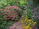 shade garden ideas hosta