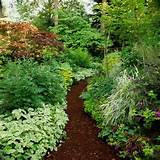 Shade Garden - a path mulched with dark wood chips becomes a stunning ...