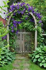 garden arch to side yard gate lovely climbing clematis