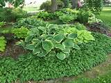 shade garden ideas hostas photograph design ideas for host 5104 unique