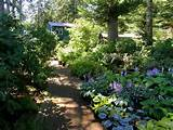 the hosta garden deep shade garden sheds and office in back
