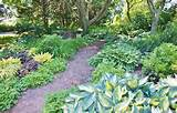 shade garden with hosta collection