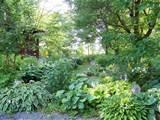 Hosta shade garden