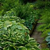 hosta path country garden ideas homes gardens housetohome