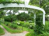 white garden arch in the garden