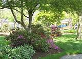 flower garden designs flowering shade garden ideas 640x467